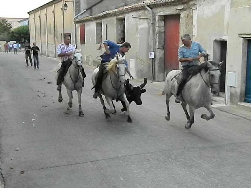 La course Camaguaise, une fête et tradition Camarguaise 6b31df9db76